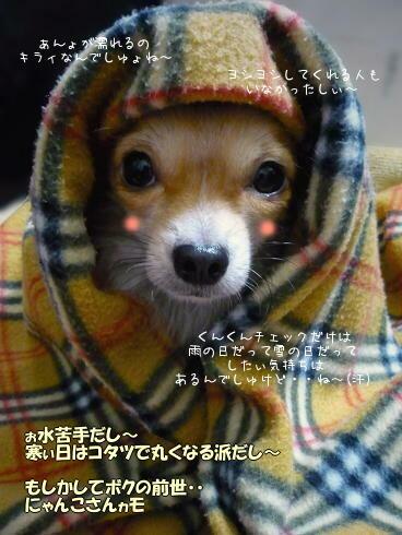 モキュキュ・・ dU(* ・ω・ *)U ・・モキュキュ
