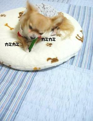 久しぶりのこの食感・・最高デシュ♪U(*〃ω〃*)U