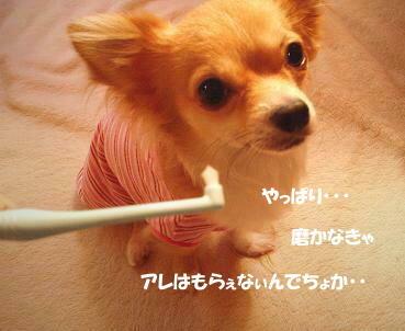 * 歯磨きタィム *