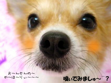 ・・・d(U* ゝω∂)