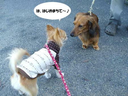 初めまして~U(*・ω・*)U(*^▽^*)♪