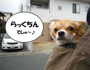 U(* ・ω・ *)U はふ~♪