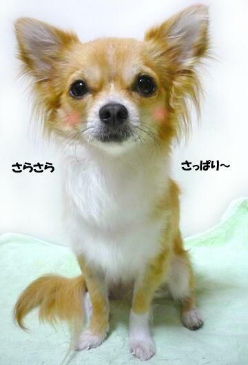 ・・・・*:..。o○☆*゚¨゚ U(* ∂ω∂ *)U *:..。o○☆*