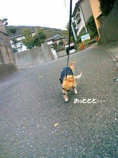 ォトットット・・( ・ω・ ;ノU)ノ  ( photo by mobile phone )