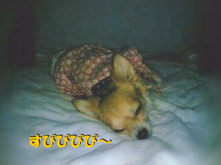 U(*-ω-)U zzz.。ooOO○ ( photo by mobile phone )