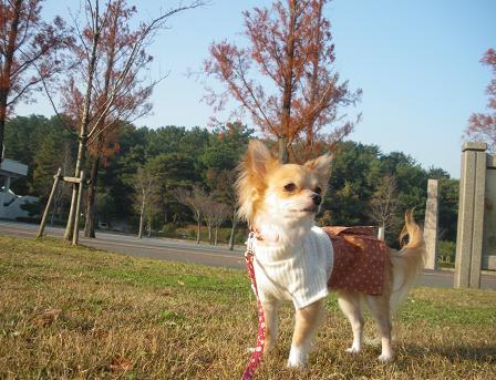 公園でぉ散歩