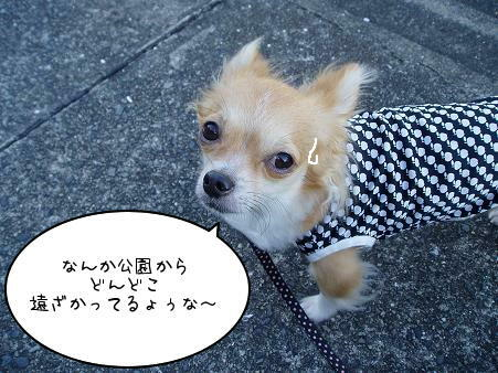 迷子とかィャでしゅょ~(・ω・`;U)