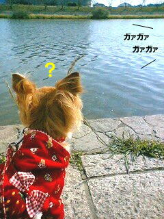 U(。 ・ω・ 。)U ・・・モキュ? ( photo by mobile phone )