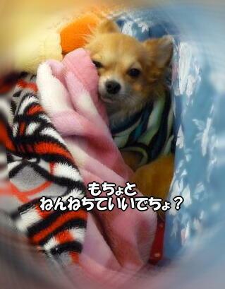 ウーン...U(。ノω-。)Uネムネム