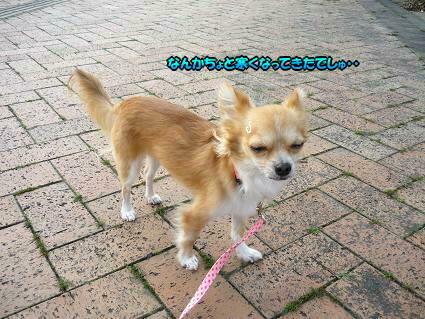 ぽんぽんでぉ散歩(*^w^*)