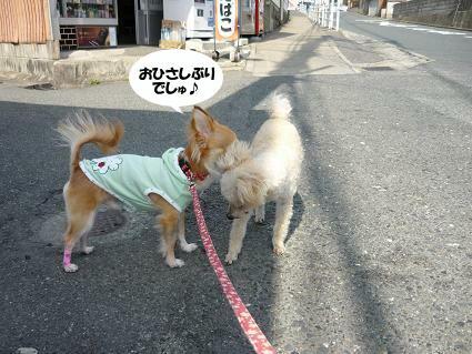 HELLO!!U(*^ω^*)Uノ