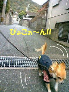 ジャ-ンプ!⌒v⌒ミ(Uノ。`・ω・)ノ  ( photo by mobile phone )
