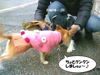 ((ヾU(*・ω・*)Uノ☆゚+.⊇ωレニちヮン゚+.☆ ( photo by mobile phone )