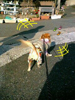 キュ-ン♪ o(^ω^*oU) (Uo*^ω^)o キューン♪ ( photo by mobile phone )