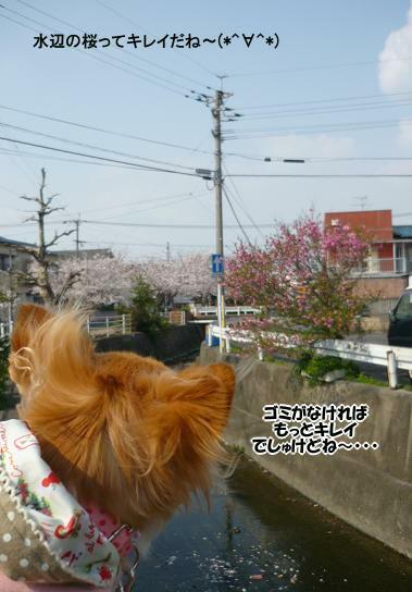 meru・・桜のぁる景色 ( 2009 april )