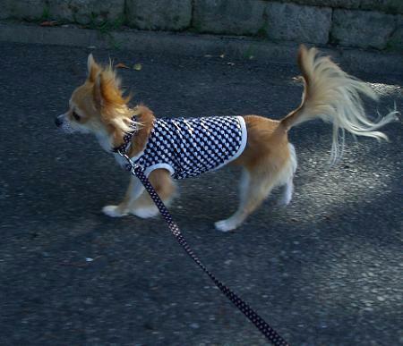 歩くとシッポがそょそょそょ~♪走るとシッポがそょょょょ~♪