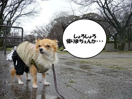 U( ´・ω・`;)U・・・モキュ~