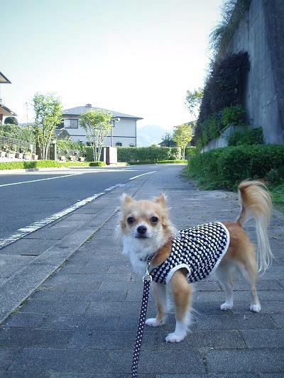 公園をトコトコしなぃんでしゅかU(・ω・)U?
