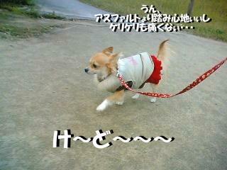 ε=ε=ε=(Uo*・ω・)o トコトコトコトコ  ( photo by mobile phone )