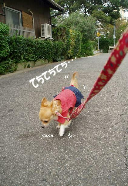 歩きながらもクンクンチェックぬかりなしU( ̄ω ̄)U