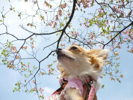 meruと花 ( 2009 april )