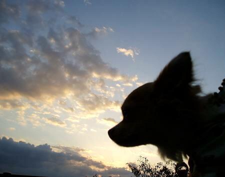 夕焼け 小焼けで 日が暮れて~♪
