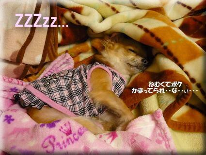 ・・・U(*-ω-)U zzz.。o○