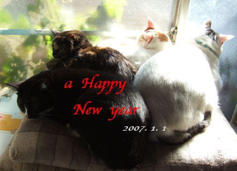 070101_4cats1as.jpg
