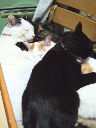 080219_4cats1.jpg