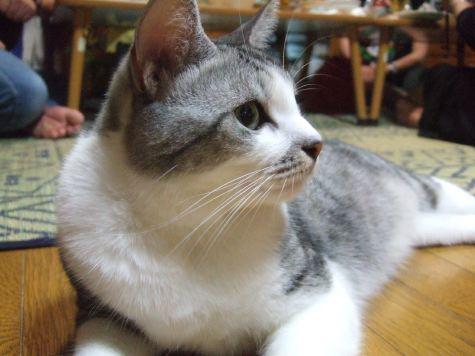 0815y_cat_d1.jpg