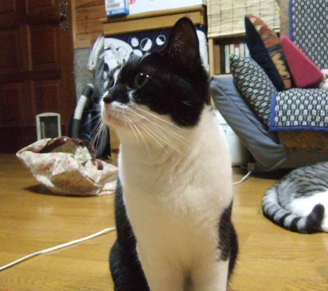 0815y_cat_e2.jpg