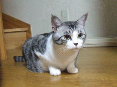 0815y_cat_h3b.jpg