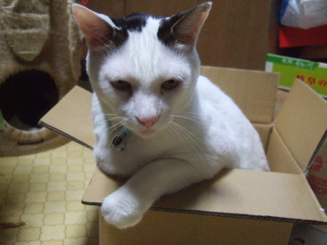 0902ji_box2as.jpg