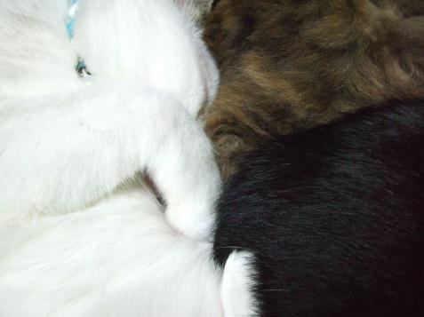1124_3cats2as.jpg