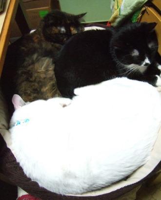 1124_3cats2bs.jpg