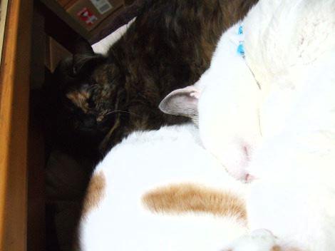 1124_3cats3as.jpg