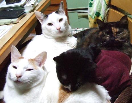 12_23_4cats3s.jpg