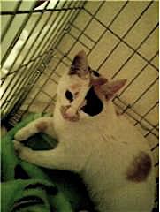 a_cat1.jpg