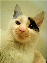 a_cat2.jpg