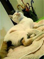 a_cat4.jpg