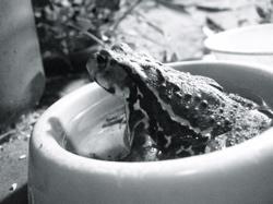frog1b.jpg