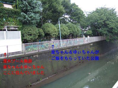s9_06park_zenpukuji~river2.jpg