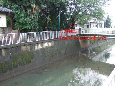 s9_06wood_zenpukuji~river.jpg