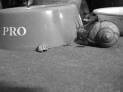 snail1b.jpg