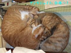 2008猫アンモナイト合体技
