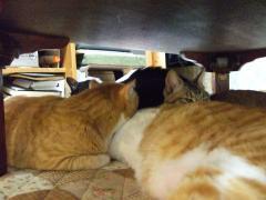 4猫、寄り添う