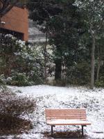 初雪2008_002ベンチ