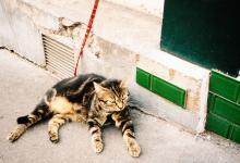 モンマルトル猫