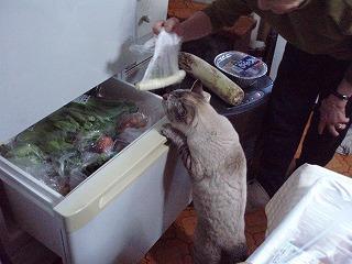 冷蔵庫が気になって