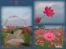 DSCF1464 2007.10.16